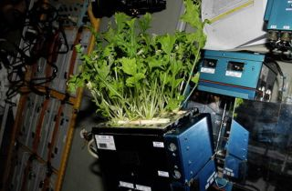 International Space Station Experimental Greenhouse