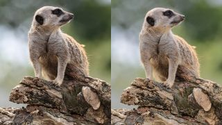 how to use Canon's Auto Lighting Optimizer camera setting