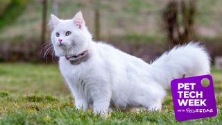 tractive cat tracker