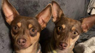 Grateful Dogs Rescue