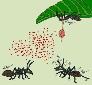 Zombie ant illustration