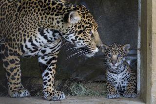 endangered species, conservation