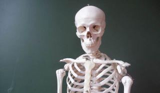 skeleton-110217-02