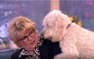This Morning fans left in hysterics as Brenda Blethyn's dog gets over-friendly!