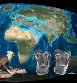 A new primate discovered in Myanmar suggests our ancestors came from Asia rather than Africa.
