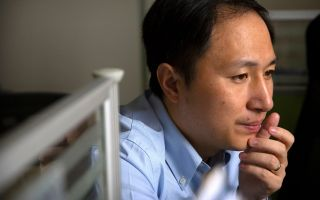 In this photo captured Oct. 10, 2018, scientist He Jiankui works at a lab in Shenzhen in southern China's Guandong province. China's government ordered a halt to work by a medical team that claimed to have helped make the world's first gene-edited babies.