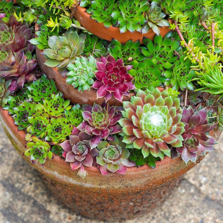 Succulents like Monty Don's