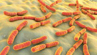 Bacteria Lactobacillus, 3D illustration.