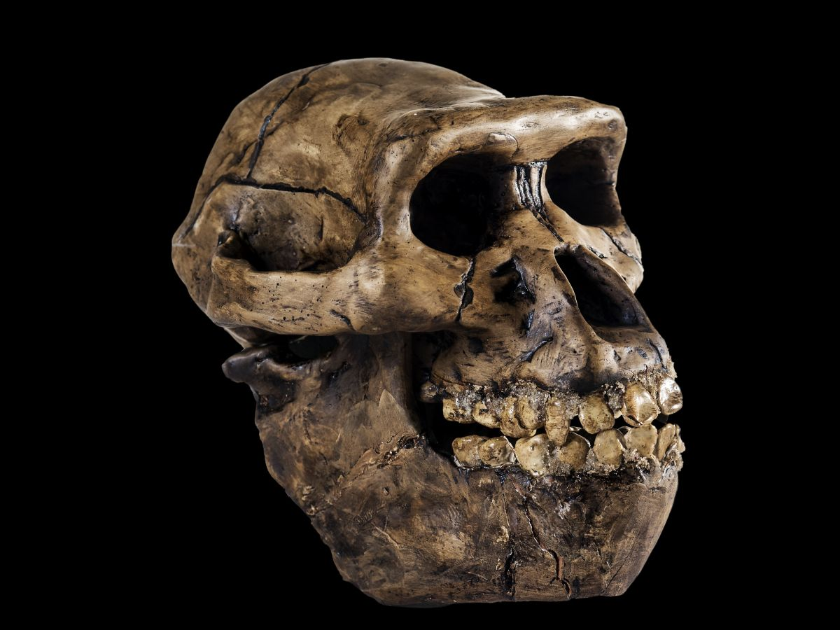 How many early human species existed on Earth? - Livescience.com