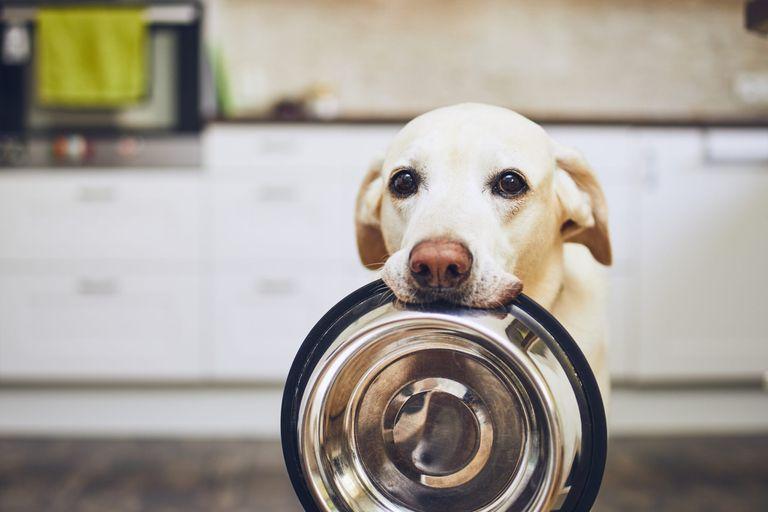 dog holding food bowl