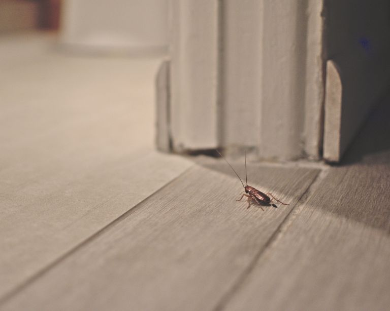 how to get rid of cockroaches - a cockroach in a house - GettyImages-1196813245