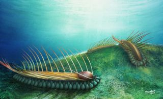 cambrian-worm-illustration