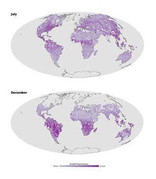 plant-fluorescence-map-110816-02