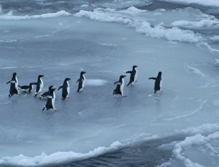Antarctic ocean voyage, conservation voyage to Antarctica, Ross Sea, southern ocean voyage, Antarctica sea life, Antarctica expedition, penguins