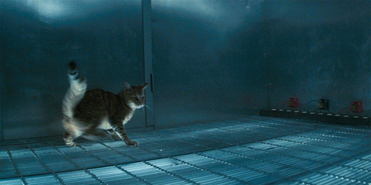 Cat's Eye cat on electrified floor