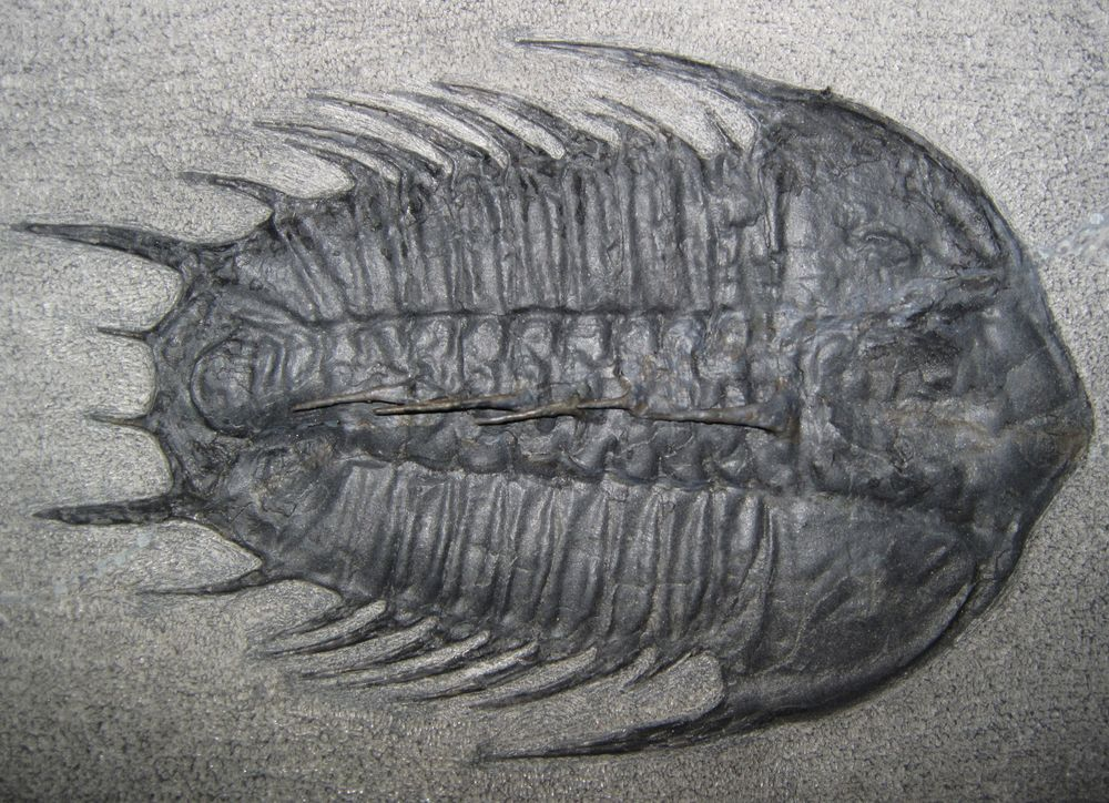 Cambrian Period & Cambrian Explosion: Facts & Information