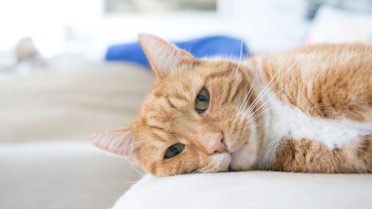 Sainsbury's and Pets at Home have issued an urged recall of select cat food products in response to a surge of feline deaths/ Maria Fedotova