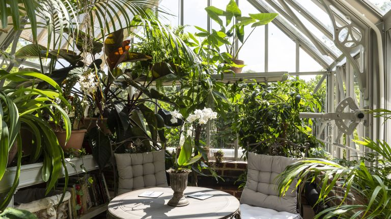 greenhouse ideas showing a greenhouse used as a tropical inspired outdoor room