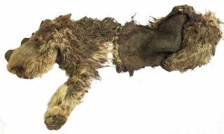 Wooly rhino body
