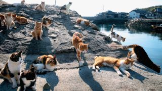 Cat Island in Japan with cats lazing on the rocks at the harbour