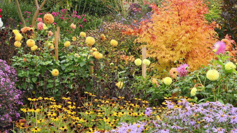 tidy up autumn garden borders for October gardening jobs