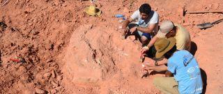 Macrocollum itaquii excavation