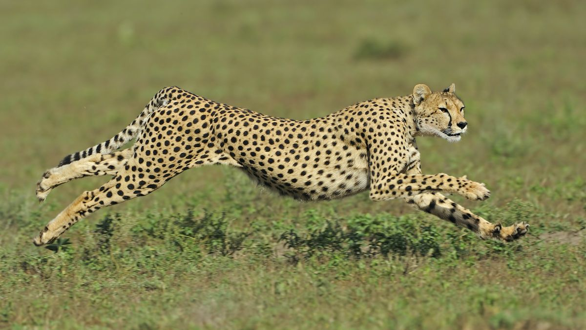What is the fastest animal on Earth?