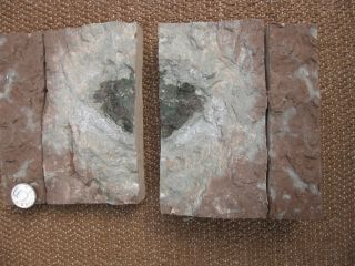 Newly found fossil meteorite