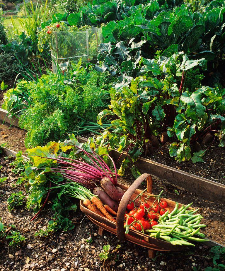 (Image credit: Amateur Gardening)