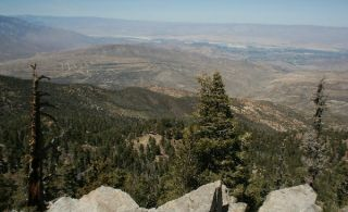 A view of the landscape where scientists found plants have shifted uphill over 30 years.