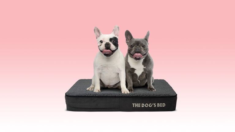 These high-tech luxury dog beds are perfect for your four-legged friends