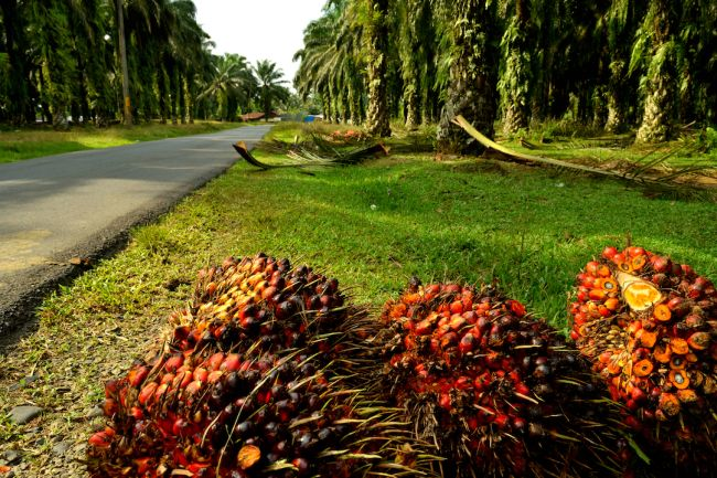 Road by a palm oil plantation where a forest used to be, in Sumatra, Indonesia.