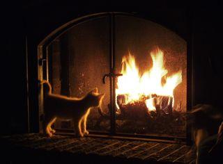 Kitten by fireplace, heat, alternative heat