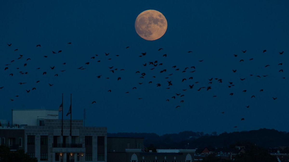 October's full 'Hunter's moon' of 2021 wows skywatchers (photos)