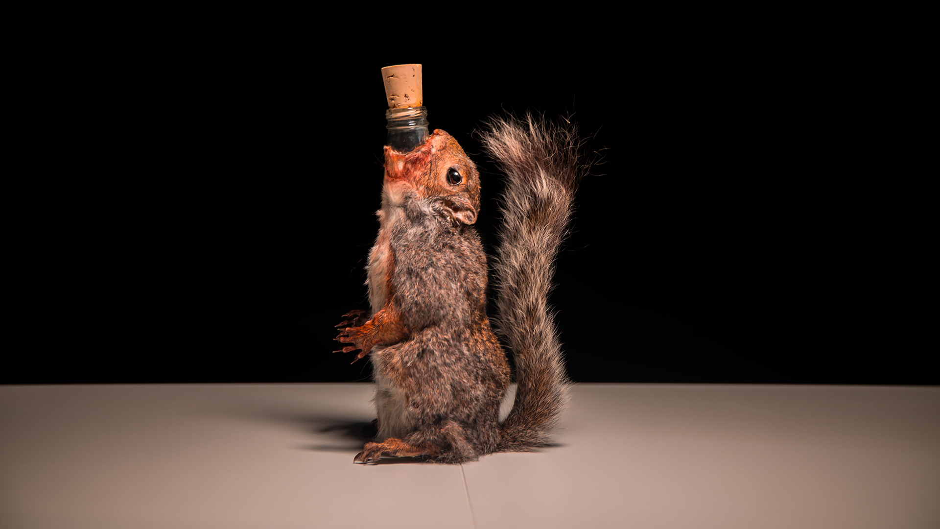 End of History beer is produced by the Scottish brewery BrewDog, and is served inside a dead squirrel.