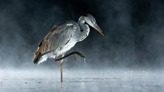 SINWP Bird Photographer of the Year unveils winning wildlife photography