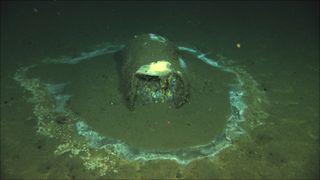 Barrel of DDT found off the coast of Santa Catalina Island in California.