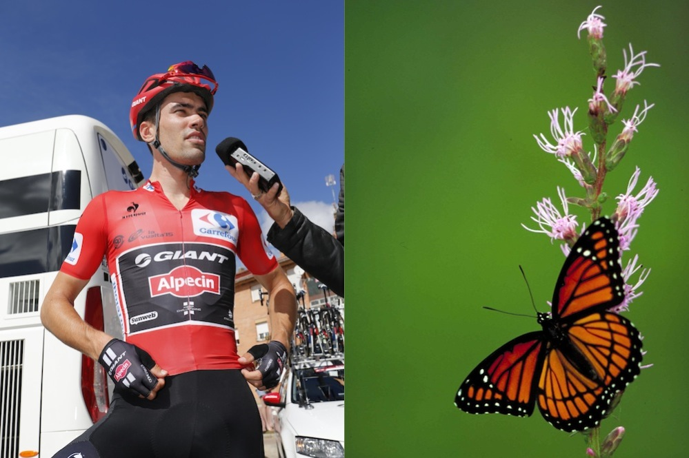 13 The Nicknames In Weekly Cycling Strangest Of 445qU