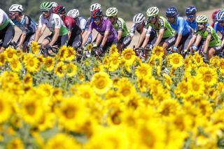 The 2019 Vuelta a Burgos peloton rides through the sunflowers
