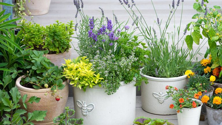 How to plant a herb pot Step-by-Step. Pretty herb planter planted with lavender, lemon thyme, golden oregano, variegated sage, rosemary, chives and parsley.
