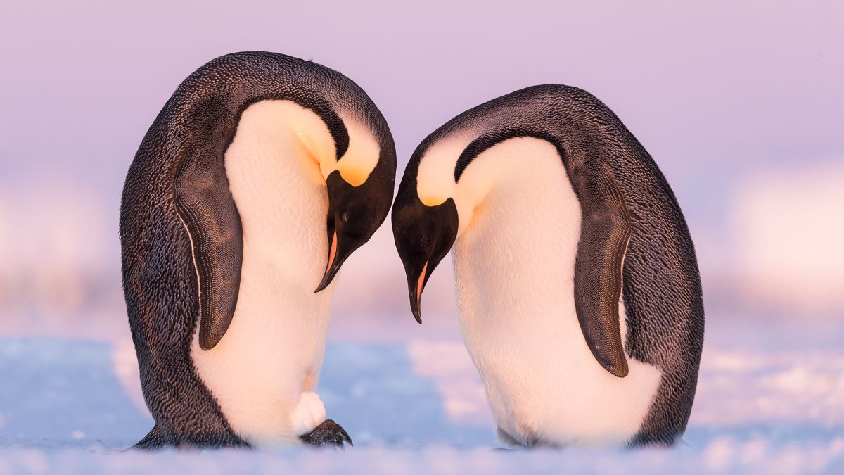 25 breath-taking wildlife photographs to choose from... But which gets your vote?