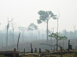 A burnt Amazon forest.