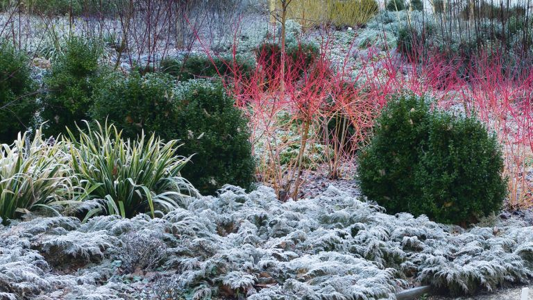 Best winter plants for pots and borders