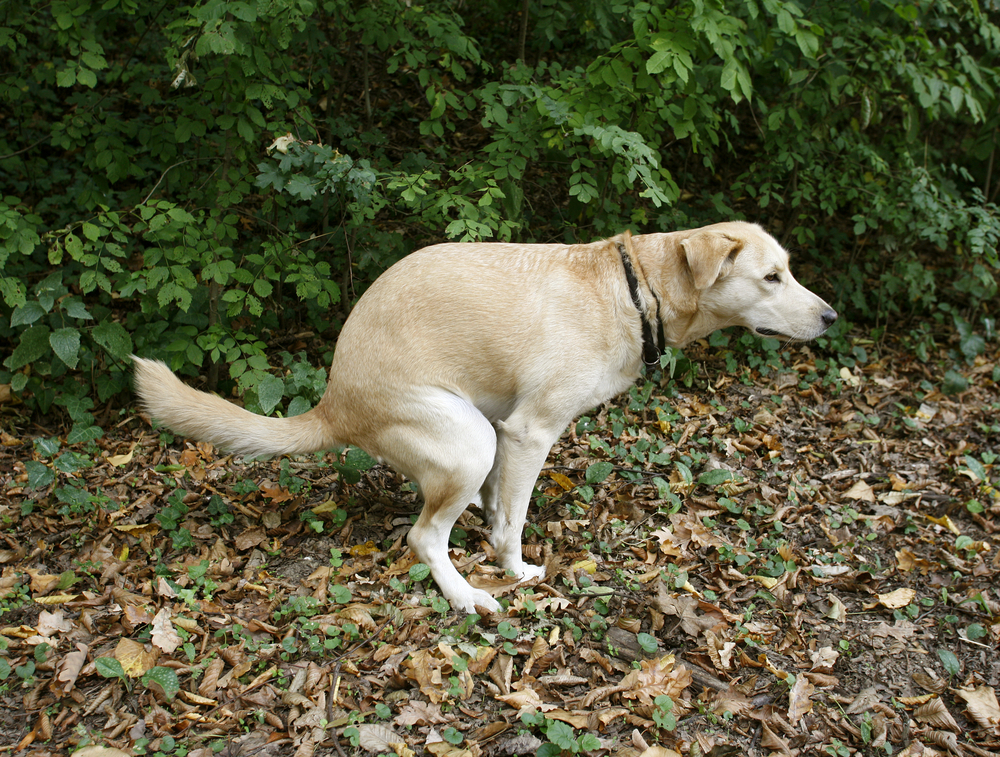 The Poop Problem: What To Do With 10 Million Tons of Dog