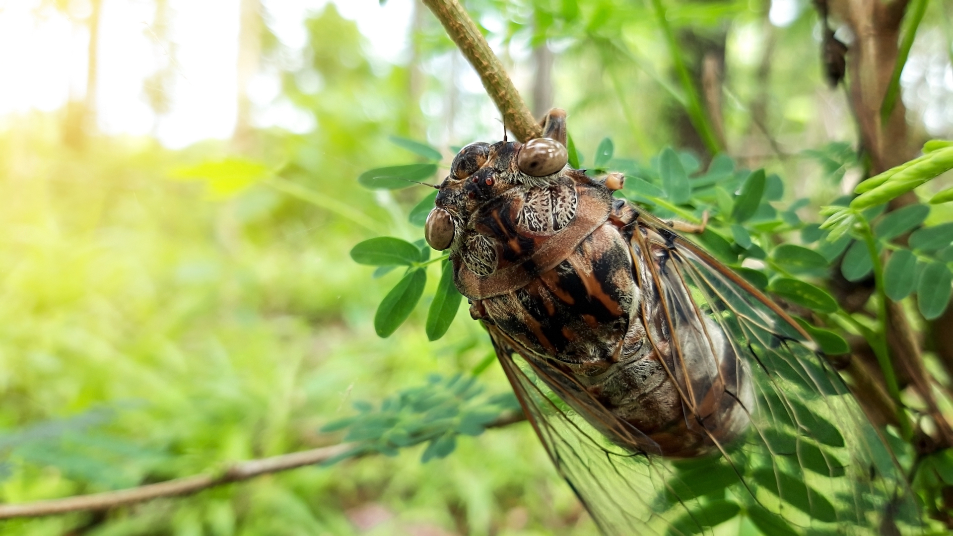A cicada sits quietly on a tree branch.