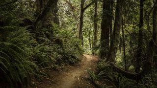 woods in Seattle, Washington