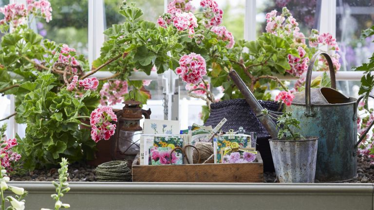Budget garden ideas showing a greenhouse with a potting bench, watering can and perlagoniums