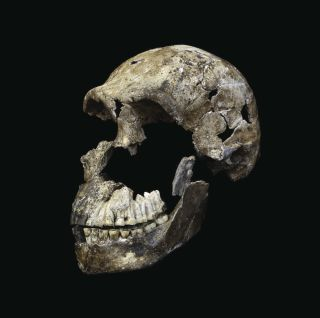 "The skull of an adult <em>Homo naledi</em> male that researchers dubbed ""Neo."" The skull, along with an almost-complete skeleton, was found in the Lesedi chamber of the Rising Star cave system near Johannesburg, South Africa."