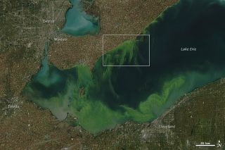 An image of the Lake Erie algae bloom acquired by NASA's Aqua satellite on October 9, 2011.