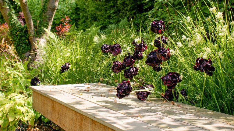 shade garden ideas: tulips